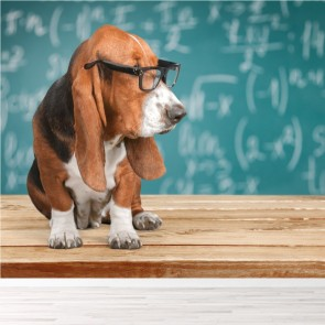 Basset Hound Dog Wearing Glasses Animals Wall Mural Comedy Photo Wallpaper