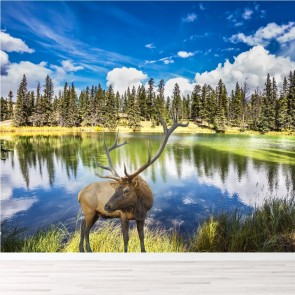 Red Stag At Lakeside Candian Forest Animal Wall Mural Landscape Photo Wallpaper