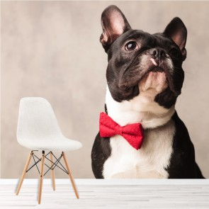 French Bulldog In Red Bow Tie Animals & Pets Wall Mural Comedy Photo Wallpaper