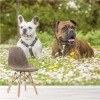 Boxer & Bulldog Dogs Playing Animals & Nature Wall Mural Home Photo Wallpaper