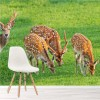 Group Of Fallow Deer Wildlife In Meadow Animal Wall Mural Nature Photo Wallpaper