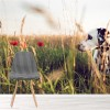 Dalmatian Dog Playing in Poppy Field Animal Wall Mural Pets Photo Wallpaper