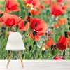 Poppies In Spring Meadow Blossom Nature Wall Mural Floral Photo Wallpaper