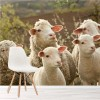 Sheep & Lambs Grazing In Pasture Farm Animals Wall Mural Nature Photo Wallpaper
