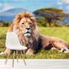 Lion King On Savannah Grass African Animal Wall Mural Nature Photo Wallpaper