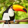 Colourful Toucan In A Tree Tropical Bird Animal Wall Mural Photo Wallpaper