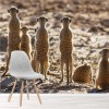 Meerkat Family Fun African Wild Animals Wall Mural Nature Photo Wallpaper