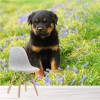 Cute Rottweiler Puppy Dog Flower Garden Animal Wall Mural Nature Photo Wallpaper