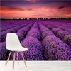 Purple Lavender Field At Sunset Floral Wall Mural Landscape Photo Wallpaper