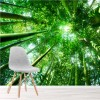Looking Up Through Green Bamboo Trees Forest Wall Mural Nature Photo Wallpaper
