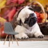 Cute Pug Puppy Dog Pet Kids Animals Wall Mural Nature Photo Wallpaper