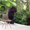 Black Panther, Big Cats In Trees Animal Wall Mural Nature Photo Wallpaper