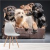 Puppies In Suitcase On Black Background Dogs Wall Mural Nature Photo Wallpaper