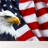 American Flag & Bald Eagle Bird Animals Wall Mural USA Photo Wallpaper