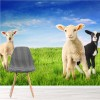 Spring Lambs On Green Grass & Blue Sky Animal Wall Mural Nature Photo Wallpaper