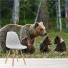 Brown Mother Bear & Cubs Forest & Trees Wall Mural Nature Photo Wallpaper