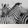 Zebra Embrace Black & White African Animal Wall Mural Nature Photo Wallpaper