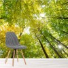 Looking Up Through Green Trees Forest Wall Mural Landscape Photo Wallpaper