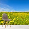 Field Of Dandelion Flowers Blue Sky Floral Wall Mural Landscape Photo Wallpaper