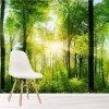 Sunlit Green Trees Summer Forest & Woods Wall Mural Nature Photo Wallpaper