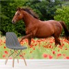Brown Horse Gallops In Poppy Field Animal Wall Mural Nature Photo Wallpaper