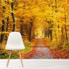 Path Through Autumn Trees Colourful Forest Wall Mural Landscape Photo Wallpaper