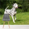 Dalmation Dog Walks In Summer Garden Animals Wall Mural Nature Photo Wallpaper