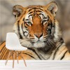 Bengal Tiger Portrait African Animal Wall Mural Big Cats Photo Wallpaper