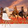 Herd Of Horses Run Through Poppy Field Animal Wall Mural Nature Photo Wallpaper
