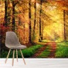 Sunlight On Autumn Forest Path Woods & Trees Nature Wall Mural Photo Wallpaper