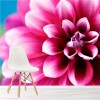 Pink Dahlia Springtime Flower Floral Wall Mural Nature Photo Wallpaper