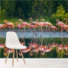 Pink Flamingo Birds On Lake Wild Animals Wall Mural Nature Photo Wallpaper