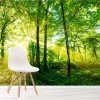 Bright sunlit In Green Trees Forest Landscape Wall Mural Nature Photo Wallpaper