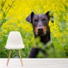 Dobermann Dog In Yellow Flower Meadow Animal Wall Mural Floral Photo Wallpaper
