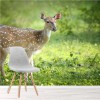 Spotted Deer Grazes In Forest Wild Animal Wall Mural Nature Photo Wallpaper