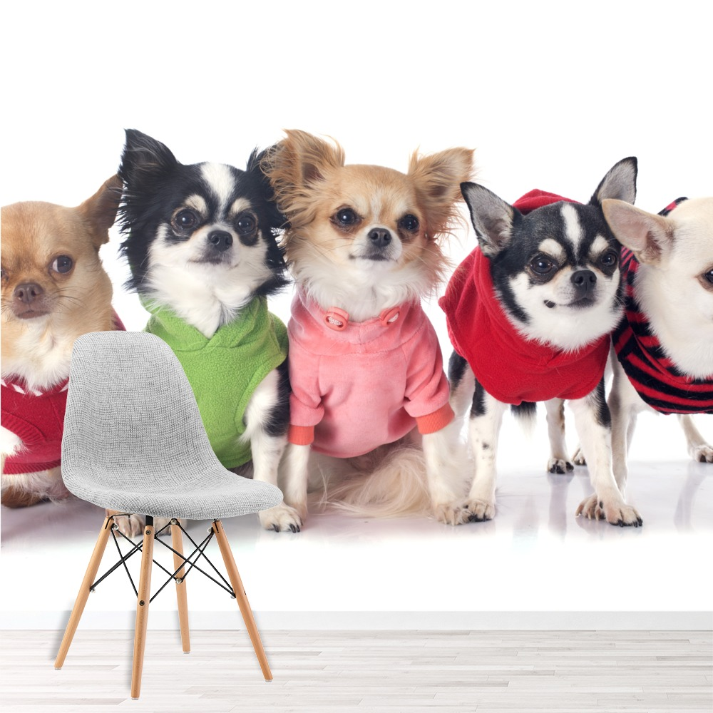 Cute Chihuahua Puppy Dogs In Jumpers Pet Animals Wall Mural Kids Photo Wallpaper