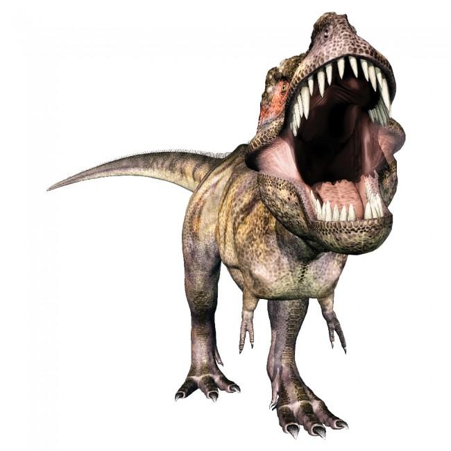 Tyrannosaurus Rex Dinosaur Wall Sticker T Rex Roar Wall