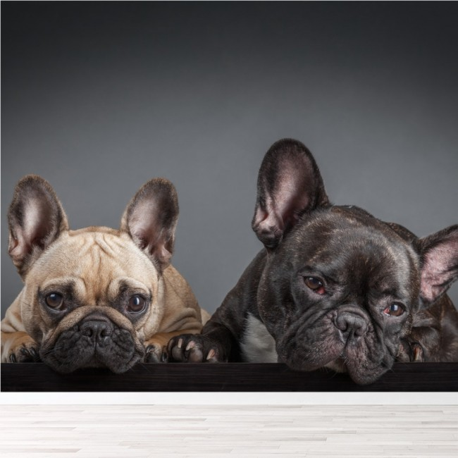 French Bulldogs Wall Mural Puppy Dogs Photo Wallpaper