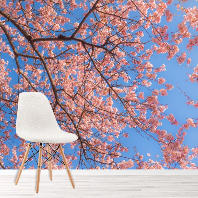 Pink cherry blossom wall mural blue sky photo wallpaper for Cherry blossom wallpaper mural