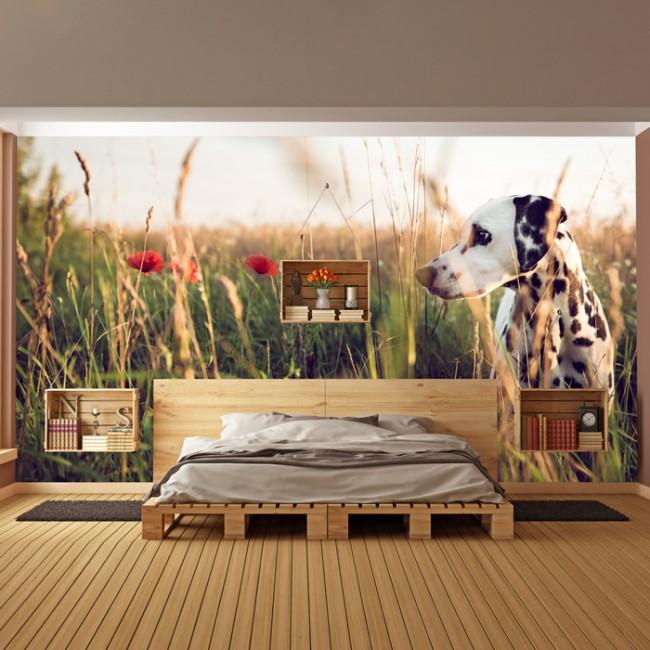 Dalmatian Dog Wall Mural Animal Nature Photo Wallpaper