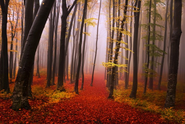 Red Path Autumn Forest Wall Mural Wallpaper