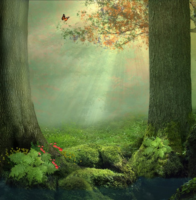 Enchanted Forest Wall Mural Wallpaper