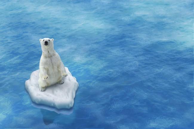 Iceberg Polar Bear Wall Mural Wallpaper