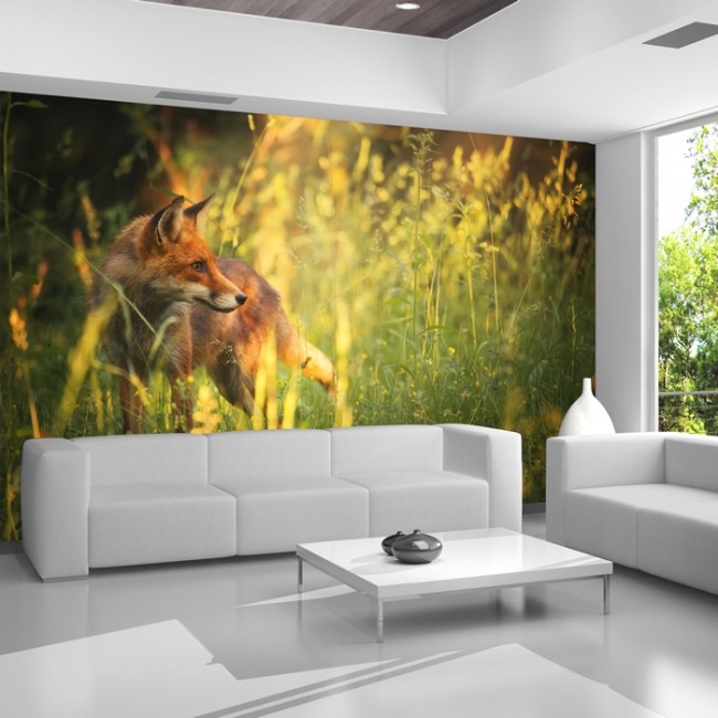 Red Fox Wall Mural Green Grass Nature Photo Wallpaper