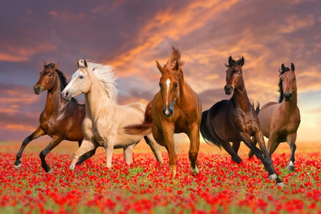 Running Wild Horses Wall Mural Wallpaper