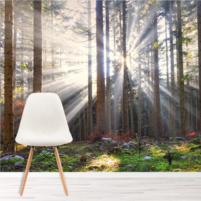 Sun shine autumn trees wall mural forest photo wallpaper for Autumn tree mural