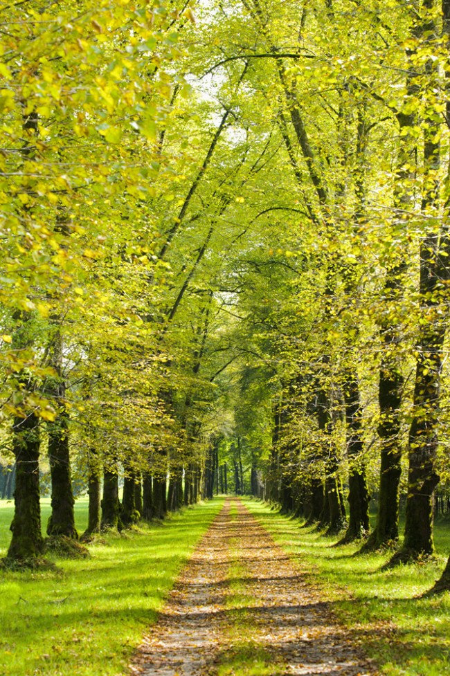 Green Trees Forest Path Wall Mural Wallpaper
