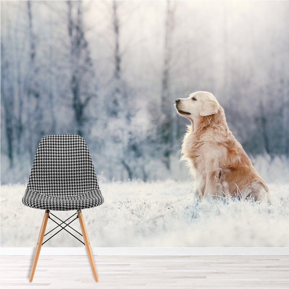 Golden Retriever Dog Wall Mural White Winter Photo